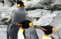 今年は、ダブルでペンギンアップデートも始動!!