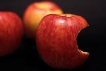 アップルが独自の検索エンジンを開発か!?アップルボットプロジェクトを発表